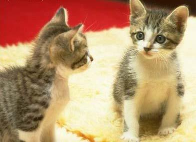 两只猫:秀秀和善来