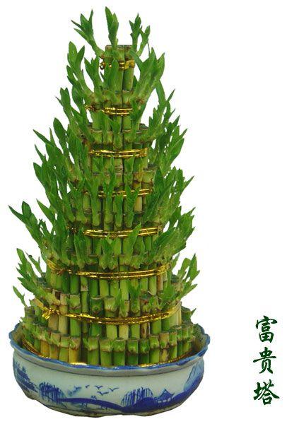 百余种常见绿植花草 常见绿植花草名称查询 欢迎跟帖